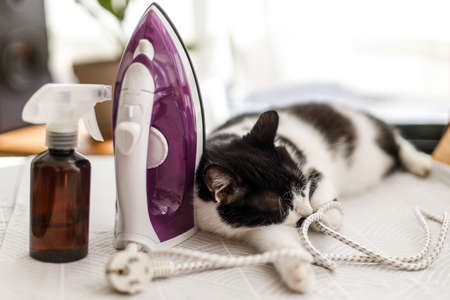 Laundry and housekeeping concept. Cute black and white cat relaxing on ironing board in stylish room, cozy moment. Little helper at home. Adorable lazy cat sleeping at iron on modern cloth Banco de Imagens