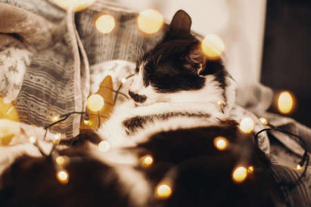 Cute cat sleeping in christmas festive lights bokeh on grey blanket at home. Cozy moody winter evening. Holidays and pets. Funny kitten playing with christmas illumination