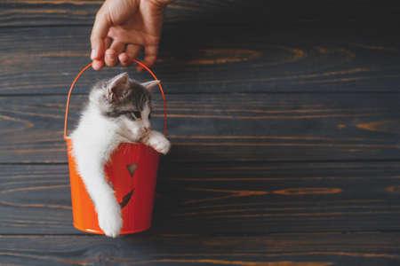 Cute kitty sitting in orange trick or treat bucket on black wooden background. Hand holding jack o' lantern halloween pumpkin pail with adorable kitten. Happy Halloween