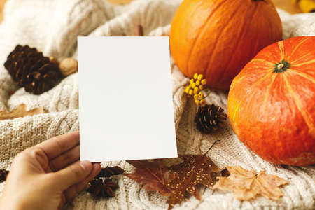 Happy Thanksgiving greeting card template. Hand holding empty greeting card on background of pumpkin, autumn leaves, anise, pine cones on knitted sweater. Autumnal postcard Standard-Bild