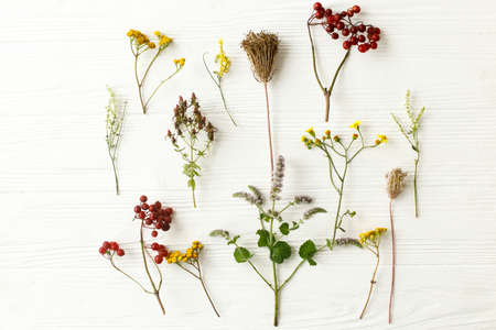 Autumn flowers on white background, flat lay. Autumnal wildflowers, herbs and berries on rustic wood. Fall garden nature details
