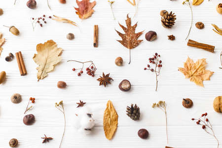 Autumn flat lay. Fall leaves, berries, acorns, walnuts, cinnamon,anise , cotton and pine cones on white background. Minimalistic autumn natural pattern