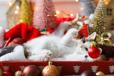 Adorable kitten playing with christmas red bauble, lying in box with santa hat on background of christmas tree and ornaments in warm illumination lights. Cozy winter holidays, Merry Christmas! Stock Photo