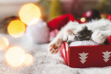 Happy Holidays! Cute kitten sleeping on cozy santa hat with red and gold ornaments in festive box with warm illumination lights. Atmospheric winter moments Stock Photo