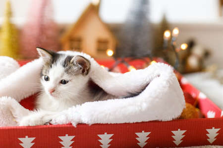 Cute kitten relaxing in cozy santa hat in red box on background of ornaments and warm illumination lights. Atmospheric winter moments. Merry Christmas and Happy Holidays!
