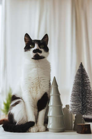Cute cat sitting at modern christmas decorations, little trees and houses. Cute black and white cat posing at miniature village, house and christmas trees in festive room. Merry Christmas!
