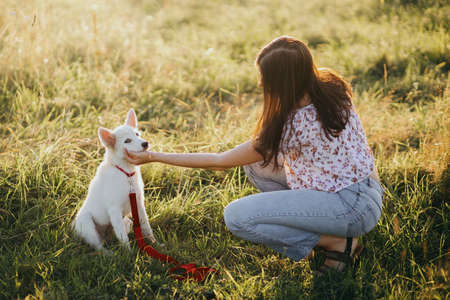 Woman training cute white puppy to behave and caressing him in summer meadow in warm sunset light. Adorable swiss shepherd fluffy puppy getting reward for learning. Loyal friend. Teamwork