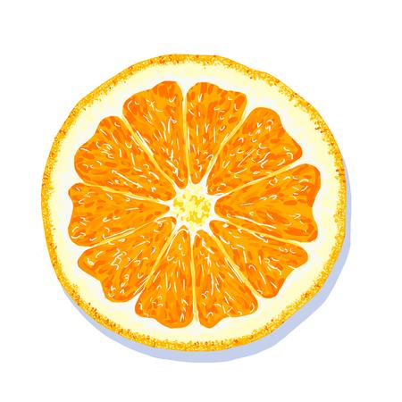 Orange. Orange segment on white background. Citrus fruit. Vector illustration Illustration