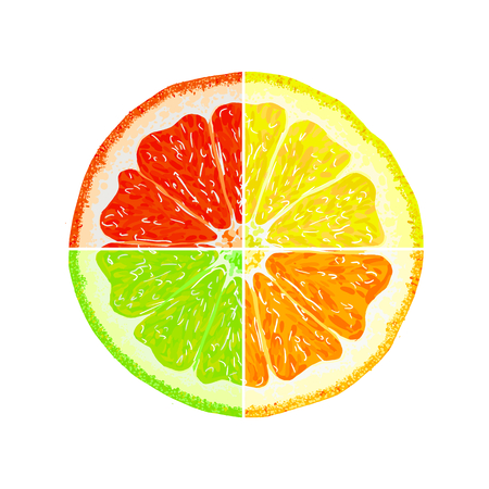 citric: Segments of orange, lemon, lime, grapefruit. Juicy citrus fruit on a white background. Set of citrus fruit. Fruit slices. Vector illustration Illustration