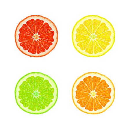 Segments of orange, lemon, lime, grapefruit. Juicy citrus fruit on a white background. Set of citrus fruit. Fruit slices. Vector illustration Illustration
