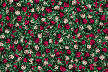 Alice in Wonderland. Red roses and white roses background. Imagens