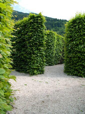 Wejście do labiryntu