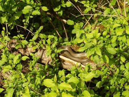 non  toxic: snake in green Stock Photo