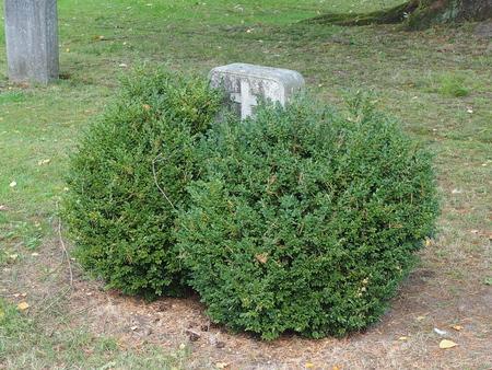 gravestone overgrown Stock Photo