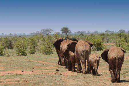 reisen: Elefanten, Kenya Stock Photo