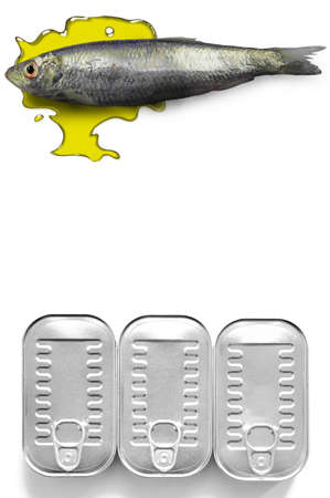 sardine: canned sardine with oliveoil and  Stock Photo
