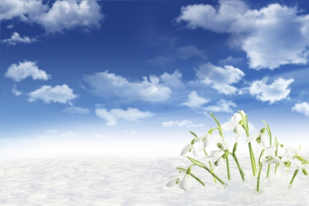 galanthus: snowdrops blue sky