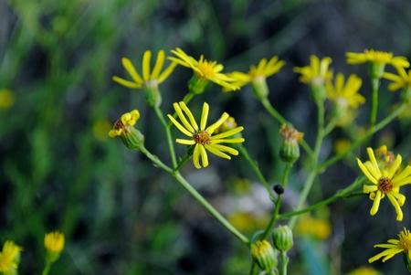 field flowers background