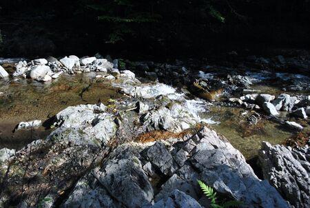 penumbra: fern on water
