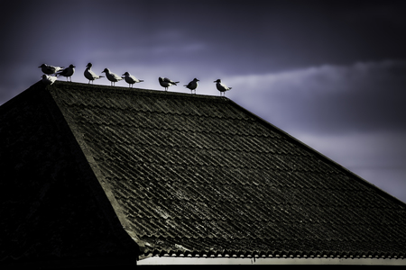 A contrasty image of seagulls on a tiled roof against a dark sky. An overall ghostly image with a stark, gothic and ominous feel.