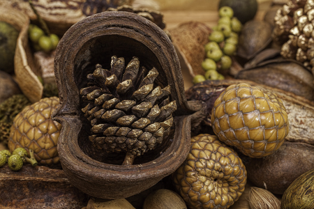 potpourri: Traditional seasonal Christmas decorations. Natural woodland items, including a gilded pine cone, nuts and berries, as used in potpourri and table decorations.