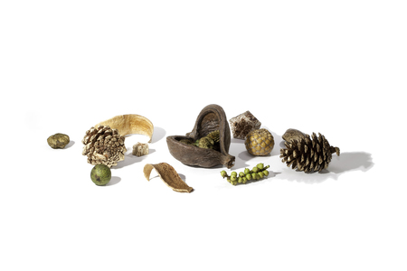 A typical Christmas card image consisting of an arrangement of a variety of dried seasonal forest items. Includes nuts, berries and sprayed golden pine cones. Isolated as a table decoration against a white background with copy space.