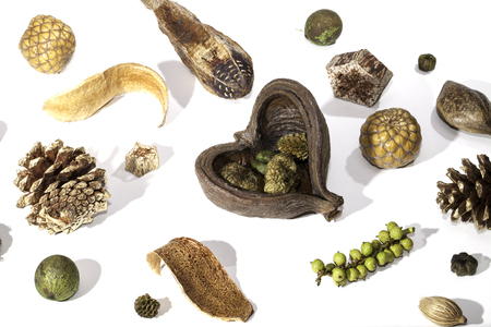 A selection of traditional Christmas potpourri items spread out and photographed against a white background. Decorative seasonal items used as a table centrepiece. Stock Photo