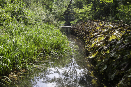English countryside stream running through a lush green wetland forest.