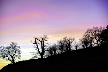 faerie: Enchanted forest - storybook image of trees on a hill in the English countryside silhouetted by a magenta sky. This is a real photographic image, slightly simplified with natural saturated colours. The overall effect is a classic story book image.
