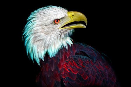 This is a real image of an American bald eagle, manipulated to reflect the changing nature of American politics. Is this National bird having an identity crisis?