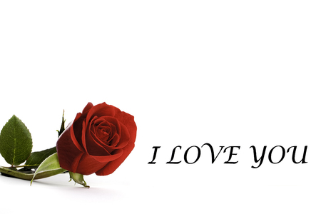calling card: Red rose with the words I Love You making a simple lover's calling card image. Space for additional text or photographs, or use as a simple gift or calling card. Stock Photo