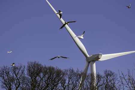 flocking: Birds heading towards a wind farm turbine. This image highlights the debate about whether or not wind turbine rotor blades present a danger to bird populations