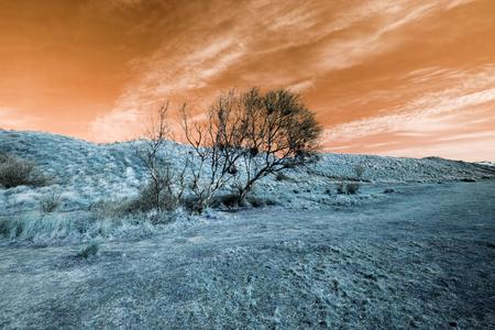 Surreal alien landscape with orange sky and blue grass. An orange sunset with light color manipulation provided this transcendental dreamlike image.