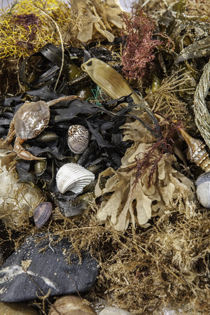 Beachcombing. Assortment of marine life and debris collected from a beach walk. Stock Photo