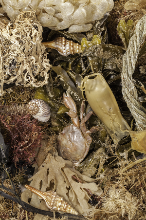 Washed ashore. Selection of marine life, shells, seaweed and debris found by combing a beach. Close up beachcombing background image.