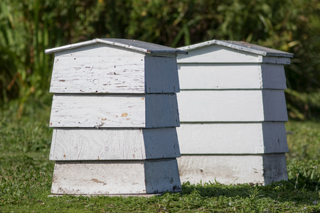 Pair of white painted wooden bee hives in the English countryside. Stock Photo