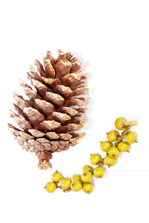 Gold painted pine cone Christmas decoration. Simple traditional decorated pinecone isolated on white backround.  Victorian style golden Xmas decoration ideal for cutting out. Stock Photo