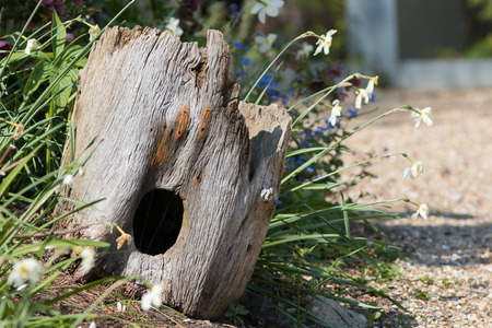 Garden wildlife haven. Beautiful natural hollow tree trunk hedgehog house decoration. Real dead wood stump retained for animals in a pretty wild country cottage garden border..
