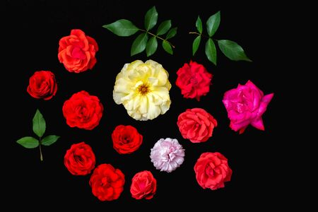 Real rose flower selection. Craft cut-out or crop. Black background flat-lay. Various beautiful individual petal colors and green leaves. Red pink and yellow roses. Valentine day image etc.