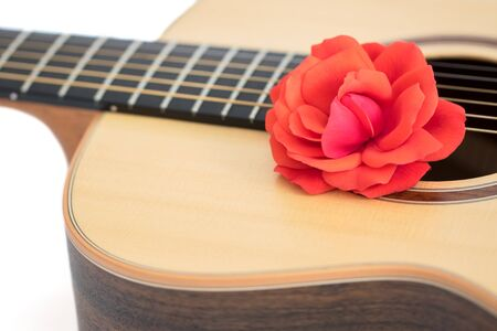 Love song. Red rose on acoustic guitar. Romantic music concept. Close up of beautiful flower on quality steel string folk guitar. Romance song writer conceptual image on white background.