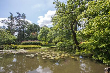 English country pond in Summer. Lush green foliage surrounding lake. Beautiful landscape image of trees and vegetation on glorious day. Banco de Imagens