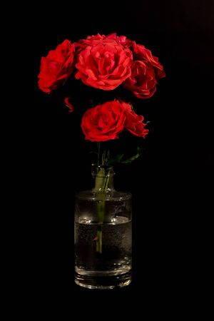 Red roses in glass bottle vase isolated on black background. Bunch of pretty flowers in water Banco de Imagens