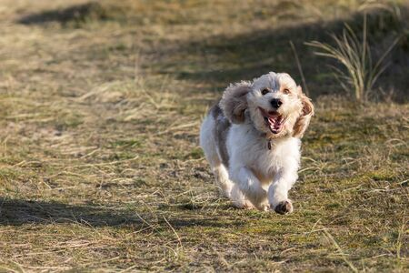 Happy dog face. Cute canine having fun running off the lead. Funny animal meme image. Loyal pet playing and enjoying freedom in the countryside. Banco de Imagens