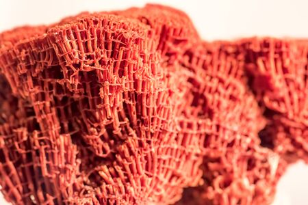 Organ pipe coral Tubipora musica selective focus macro close up.  Red alcyonarian coral found in the Indian and Pacific ocean. Beautiful patterns and texture in nature background image.  Stock Photo