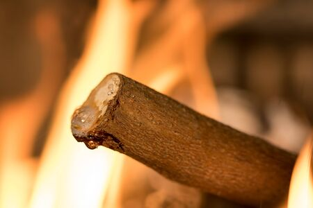 Burning wet wood. Damp non-seasoned tree log fire. Selective focus on moisture droplets forming on a cut branch.