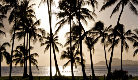 Outrigger canoe paddling behind palm trees in Hawaii Stock Photo
