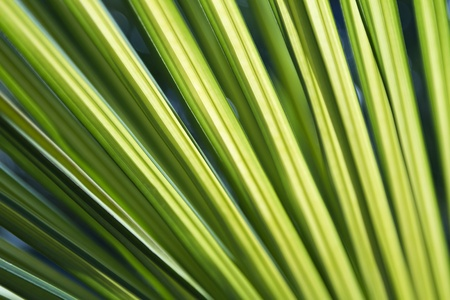Vivid green palm fronds