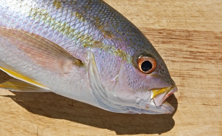 Yellowtail Snapper (Ocyurus chrysurus) on a cutting board ready to be filleted. Stock Photo