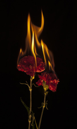 Flowers on Fire