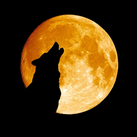 Wolf howling at the moon Stockfoto